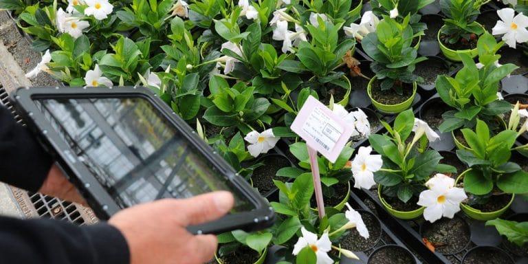 La tablette Zebra ET50 pilote la productivité horticole